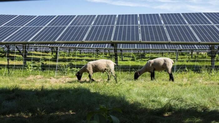 Mendon-Solar-Farm